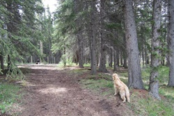 hawk avenue off leash dog park pet friendly banff parks alberta canada dog parks