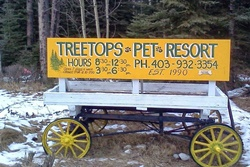 treetops pet resort pet friendly banff dog friendly alberta canada dog boarding and grooming